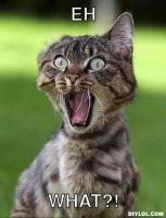 surprised-cat-meme-generator-eh-what-ae30dc